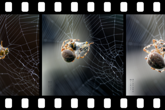 Film spider emballages